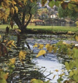 Autumn in the Okanagan (Jacquelyn Larden)
