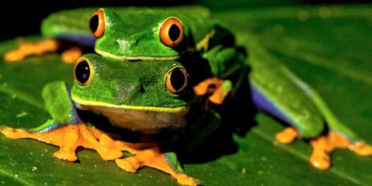 THE RARE AND  INCREDIBLE 4 EYED 4 LEGGED FROG  3 OF 4