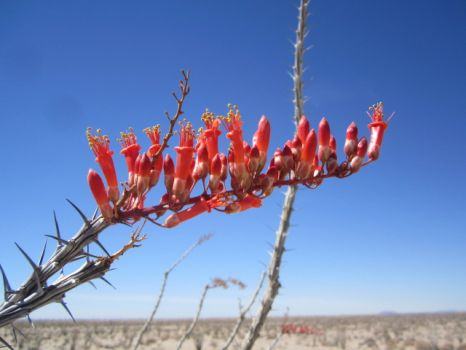 Theme: Spring is in the air. At least in the desert