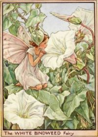 The White Bindweed Fairy (mini)