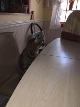 Where's dinner?