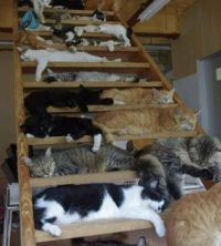 Stairway to Heaven for cats