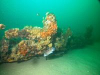 Paul Palmer Wreckage - wood hull grown over with coral