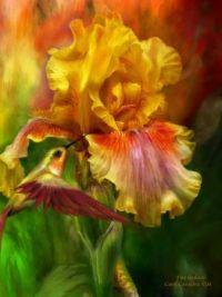 Fire Goddess Iris with hummingbird