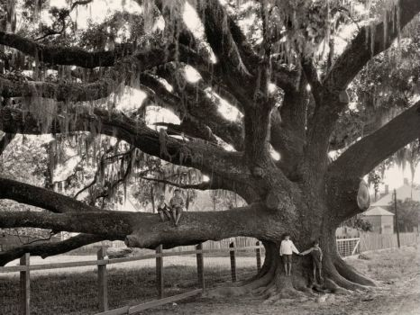 Oak Tree, Louisiana