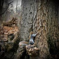 Squirrel, Central Park, NYC