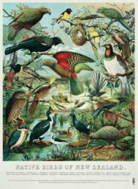 native-birds-poster