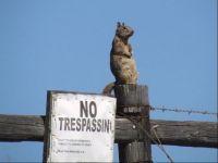 Weekly theme is signs (ninja lookout)