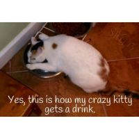 My kitty has a drinking problem