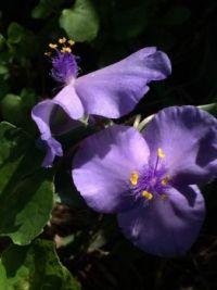 delicate blue--medium