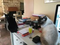 with cats you'll never work alone