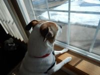 Watching for the groundhog!