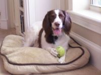 Murphy w ball