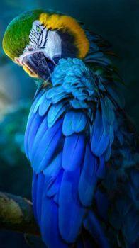 2  ~  'Busy Ara in Blue.'