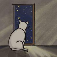 Cat watching fallen star
