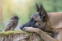 """Unlikely Friendship"""