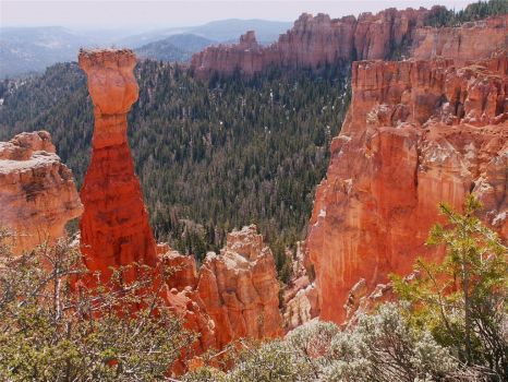 Hoodoo in Bryce Canyon