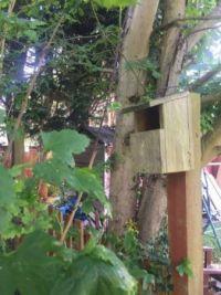A robin's bird box.