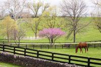 Spring in Kentucky