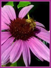 Let's bee in the garden