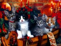 Christmas Kittens (larger)