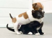 Dogs-who-think-they-are-cats-