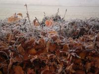 Icy hedge !