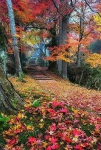 Forest fall path
