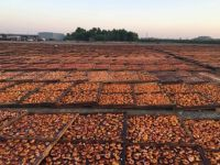peaches drying at Gleanings for the Hungry in CA
