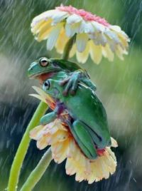 flowers and frogs