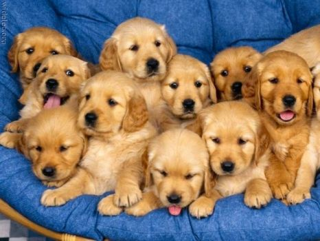 Puppys for Denise