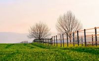Fence and Trees at Dawn