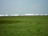 Tallgrass Prairie National Preserve (Theme)