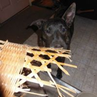 Who ate the wicker basket?