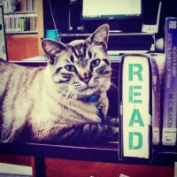 #1:  Browser the Cat loses Job at Texas library