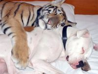 Other examples of strange and improbable animal friendships: