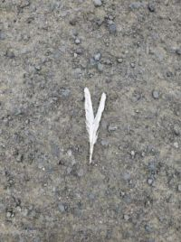 Finding beauty on a special walk: Two feathers in my path