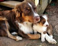 Mother and her pup