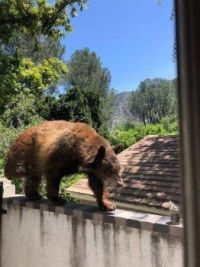 Neighborhood bear . . . . . .