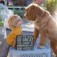 Foster child Buddy and his friend Reagan the adorable labradoodle6