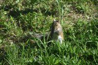 Squiggy the squirrel.