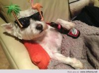 Party animal !!!