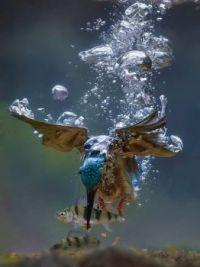 ptáček s rybou