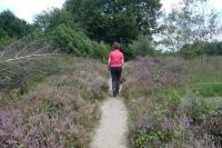 A walk on the heath