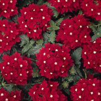 053 - Pretty Flowers