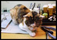 Feline Jewelry Design Helper