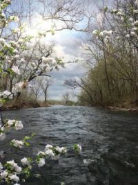 Spring Time on the River