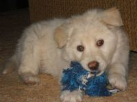 Beary White in his puppy days . . .