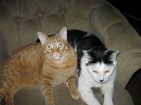 Moo & Opie