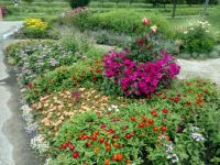 Summer Garden in Holland Michigan